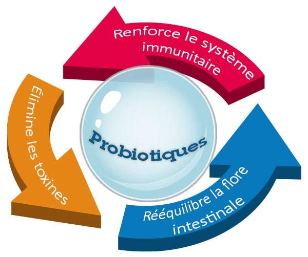 Consommez des probiotiques pour faire tomber la fièvre