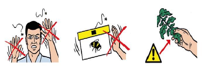 Comment éviter la piqûre de bourdon