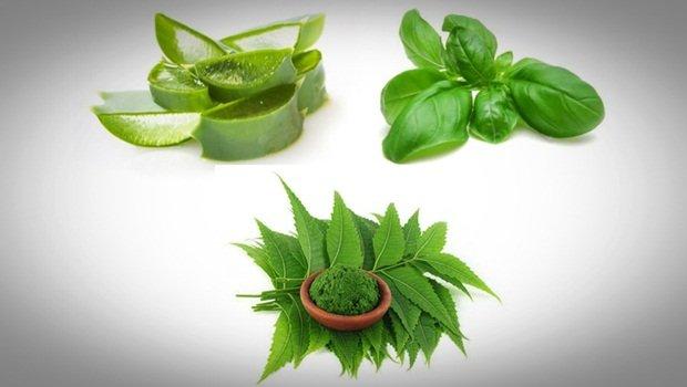 Aloe vera acné : Masque à l'aloe vera, aux feuilles de basilic et aux feuilles de neem contre les boutons d'acné