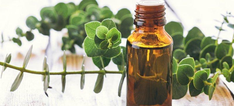 L'huile essentielle d'eucalyptus contre les maux de tête