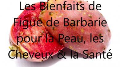 Photo de Figue de barbarie Bienfaits : Un fruit miraculeux pour la santé & la beauté !
